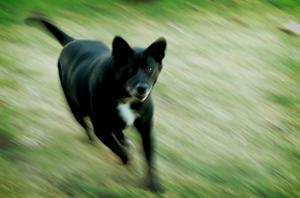 Stockton Dog Bite Injury Lawyer